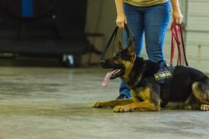 Austin Dog Training