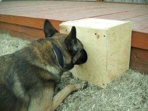 Cedar Park Dog Training