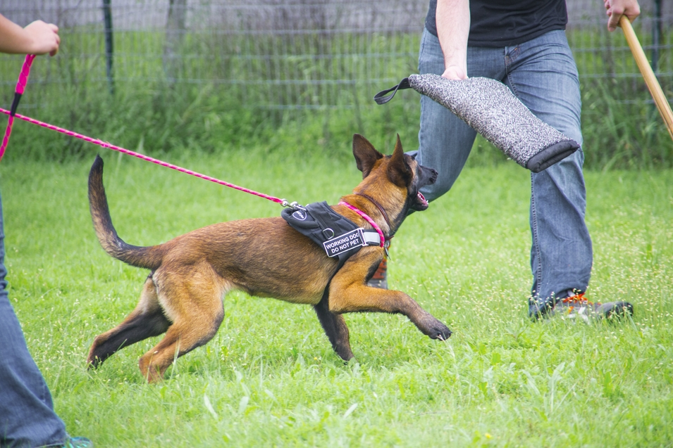 Protection Dog Training Austin Texas | Personal Protection