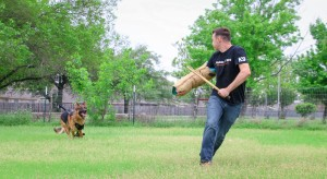 Protection Dog Training Austin Texas