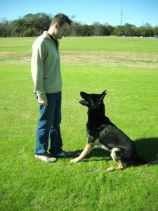 Dog Obedience Austin